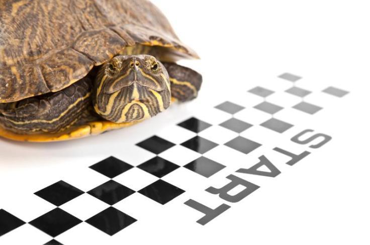 racing_turtle